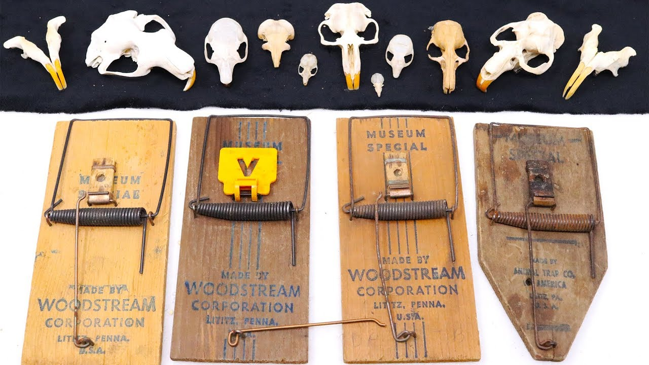 the-museum-special-mousetrap-for-collecting-biological-samples-mousetrap-monday