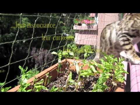 Le comportement du chat pourquoi installer une cl ture for Protection fenetre chat