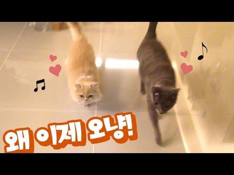 조별로 마중 나오는 고양이들 🐈  |  김메주와고양이들