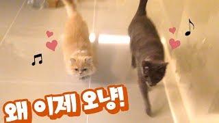 조별로 마중 나오는 고양이들   |  김메주와고양이들