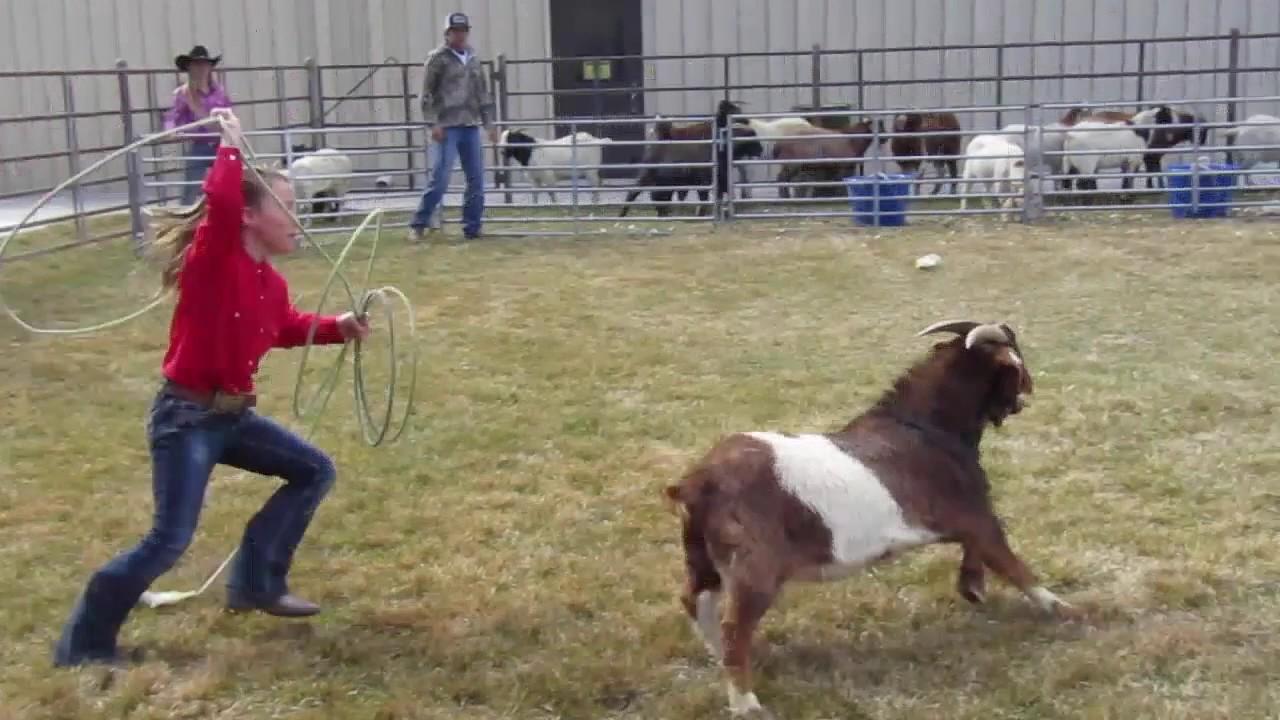 Goat Roping Winnemucca Rodeo 2017 Youtube