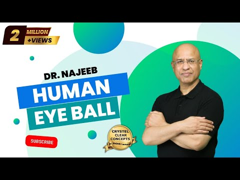 The Human Eye Anatomy Structure Amp Function Youtube