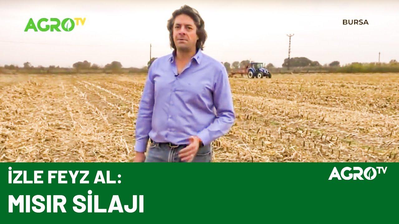 Çiftçilere Mısır Silajı ve Sonrası Hakkında Faydalı Bilgiler / AGRO TV