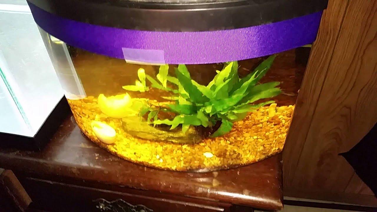 Planarian Planaria Worms Dangerous Aquarium Pests