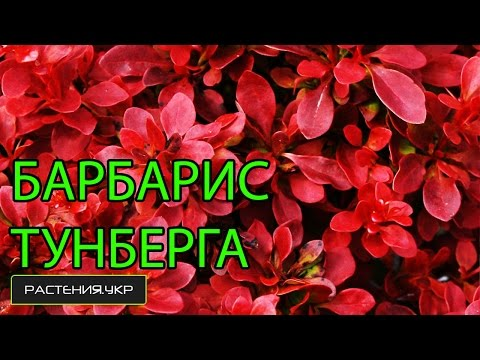 Бабяковский плодопитомник