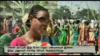 Big Story About Traditional Pongal Festival - Part 2