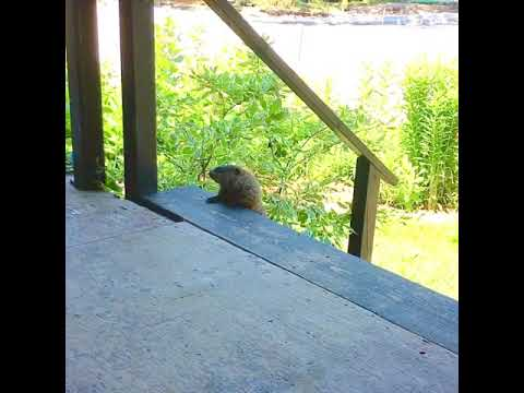 Groundhog Day my front porch Summer 2020 - YouTube