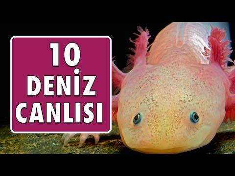 En Tuhaf 10 Deniz Canlısı