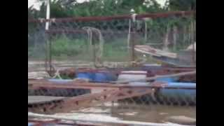 Cage farming of Pangasius in Vietnam