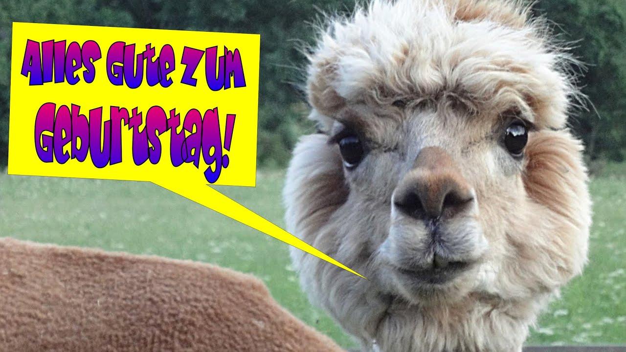 Tierische Geburtstagsgrüße Zum Lachen Lustiges Geburtstagsvideo