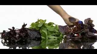 видео Применение базилика в кулинарии.. Зелень в кулинарии. Лучшие рецепты с душистыми травами