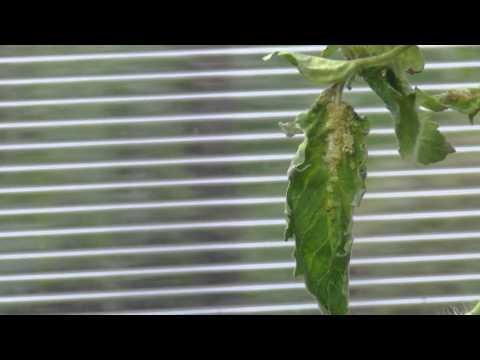 Защита растений от грибковых и вирусных заболеваний