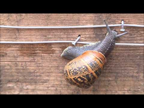 Electric Slug and Snail Fence