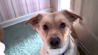 Funny Dog Movie- Cleo and Faye -Available for Adoption