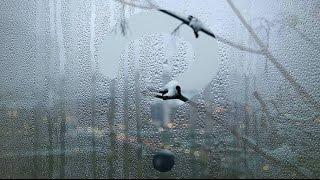 Почему потеют окна? Что делать?(В этом видео я расскажу что делать если на металлопластиковых окнах скапливается конденсат! Подписаться..., 2015-12-11T11:06:38.000Z)