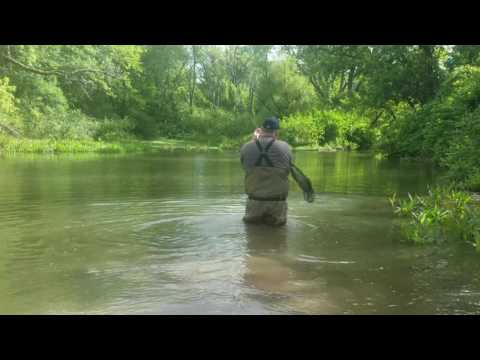 Pennsylvania Chain Pickerel