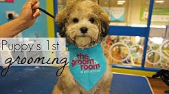 Puppy goes to The Groom Room at Pets At Home | Winnie The Poodle | Annie Bean