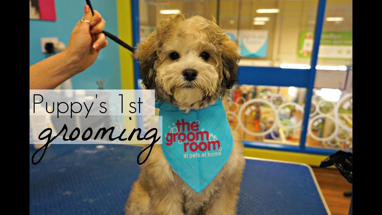 The groom room pets at home