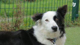 'Nervous' dog abandoned at gates outside DSPCA in Dublin