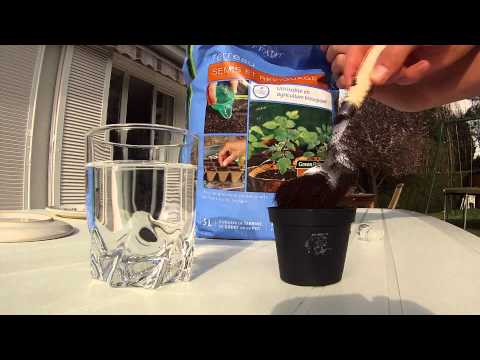► How to grow weed indoor Skunk Automatic [HD]