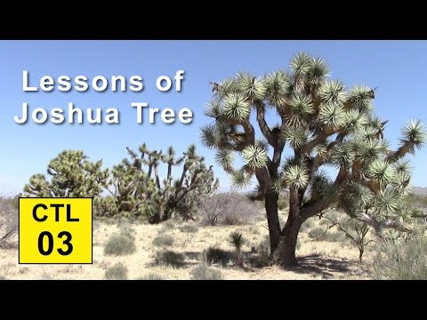 Climate, Trees, and Legacy: 03 - Lessons of Joshua Tree