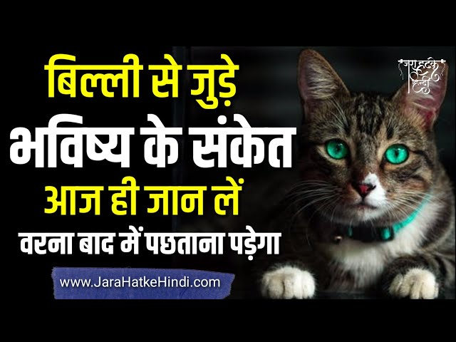 बिल्ली से जुड़े भविष्य के संकेत, आज जान ले वरना, बाद में पछताना पड़ सकता है