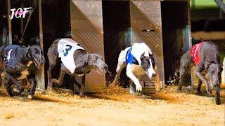 Ireland Greyhounds Racing  Track Race