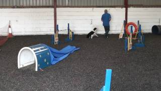 Dog Agility Training Pt1