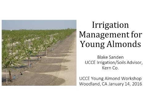 Irrigation Management for Young Almonds