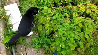 Кошки-мышки))Знакомьтесь-Бася.