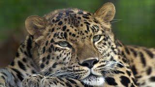 10 gatunków ZWIERZĄT najbardziej zagrożonych wyginięciem