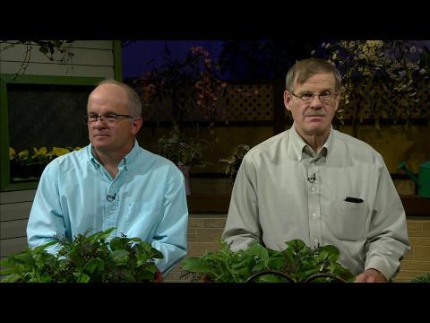 Great Gardening - Salad Fixings