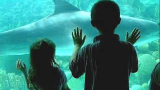 SeaWorld Tickets- Discount SeaWorld Tickets- Cheap SeaWorld Tickets $20
