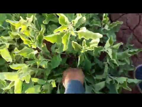 Farming of Organic and Natural Herbs