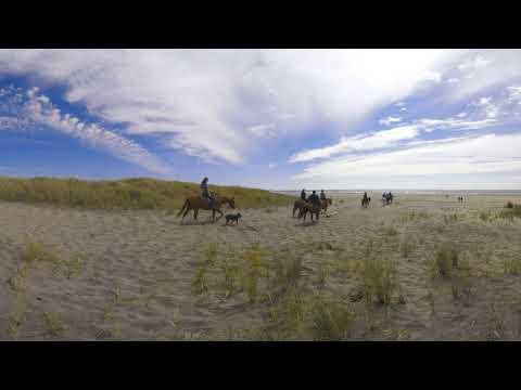 Virtual Visit to the Long Beach Peninsula - The Beach
