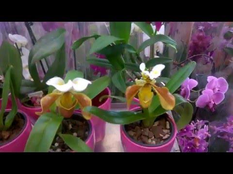 Орхидея для начинающих
