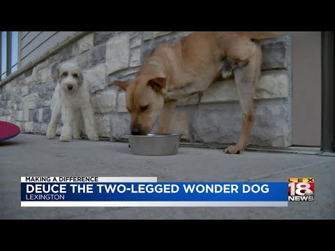 Making A Difference: Deuce The Two-Legged Wonder