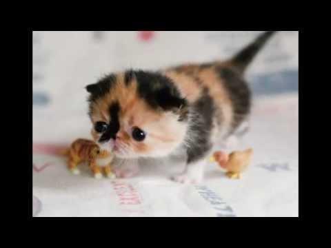 ТОП 10 Милых котят - YouTube