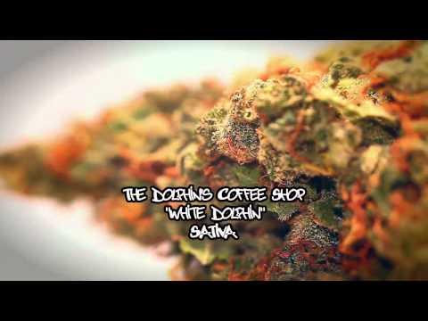 23rd HIGH TIMES Cannabis Cup - Strain Entries