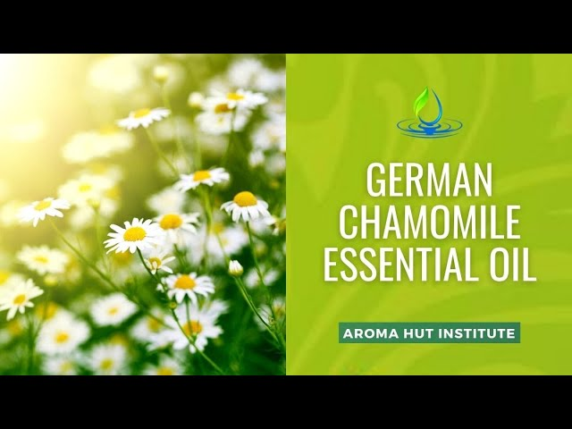 German Chamomile Essential Oil | Uses and Benefits