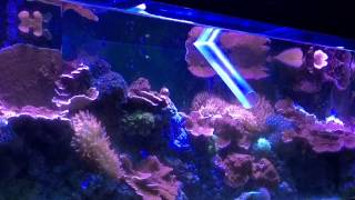 Water Change On My 125 Gallon Coral Reef Fish Tank