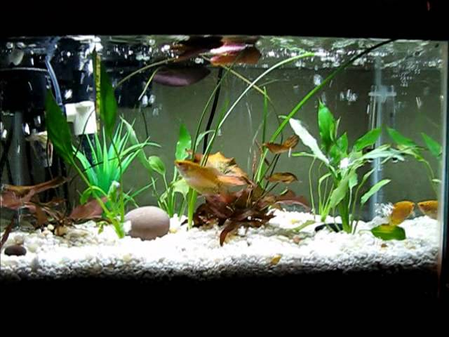 diy my aquarium with filtration under gravel for crystal water