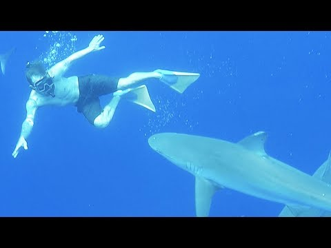 SWIMMING WITH SHARKS! (I Almost Was Bit!)