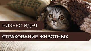 Бизнес-идея - Страхование животных