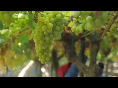 Silverlands Vineyards, Namibia