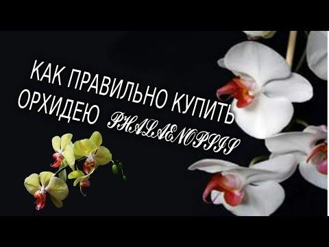 Как правильно купить орхидею ФАЛЕНОПСИС !!!