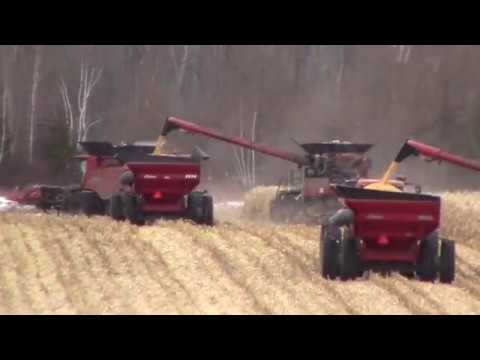 Corn Harvest at Ridge View  12-2-19