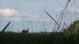 deer hunt 22 savage 110 fcp hs 338 lapua mag hd
