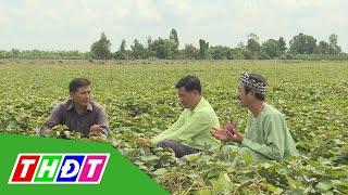 Tín hiệu vui từ trồng khoai lang tím Nhật thu nhập cao | THDT