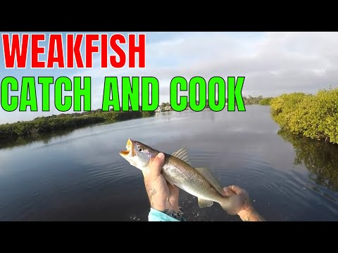 SURPRISE WEAKFISH CATCH AND COOK..QUICK AND SIMPLE